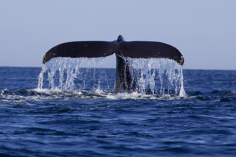 Whale Watching Kauai